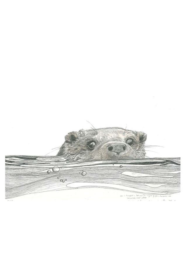 Picture of Hannah Longmuir Print - Otter in Water